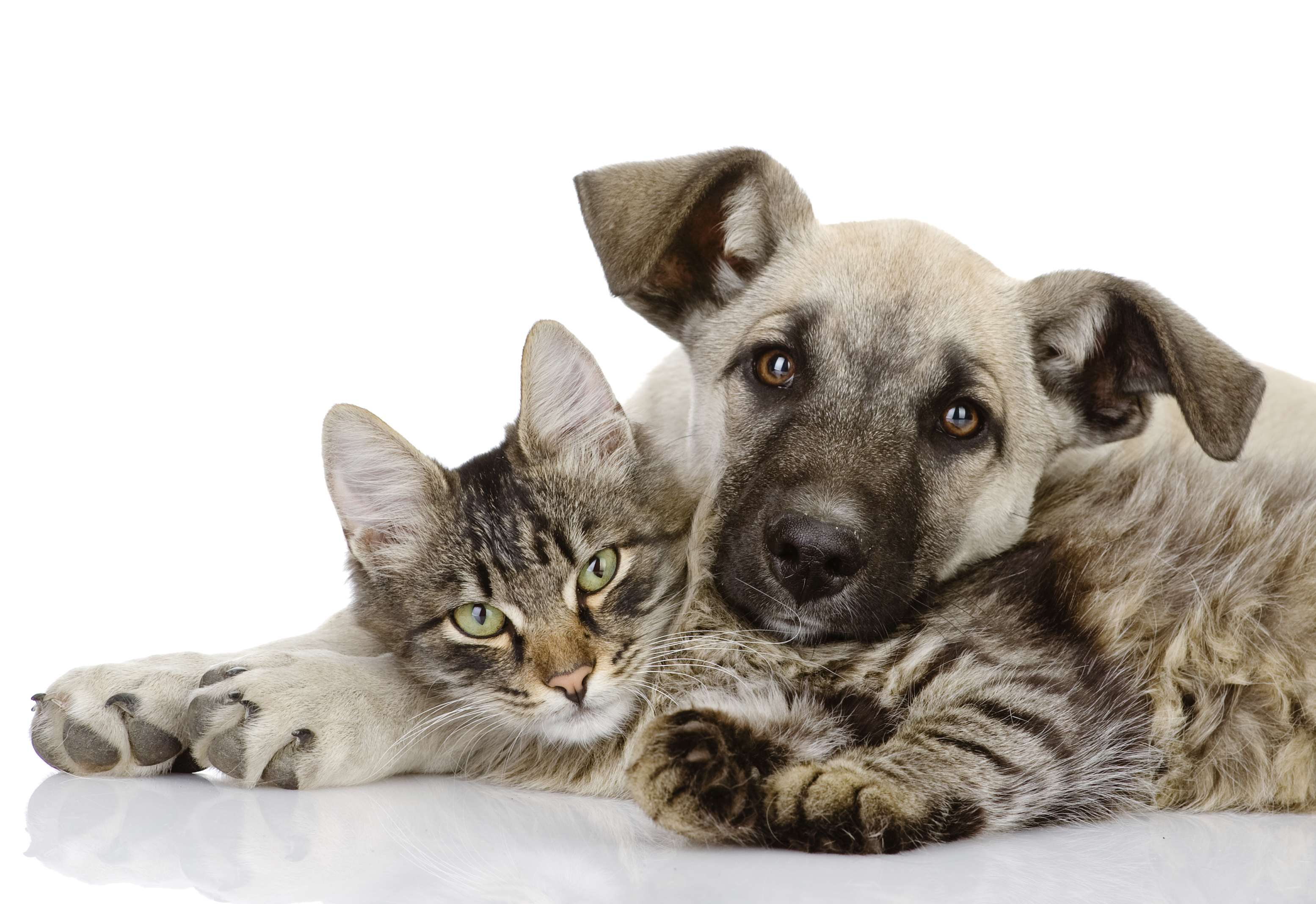 Disadvantages and Risks of Low-Cost Spay and Neuter pic